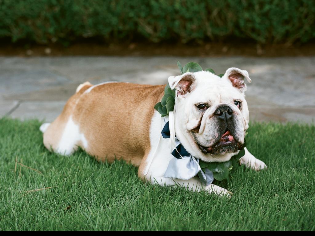 Bambino, the couple's bulldog, served as ring bearer.