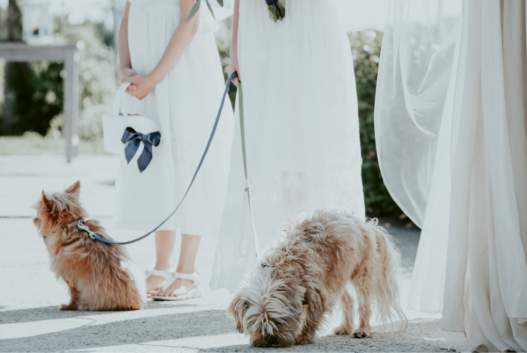 For the  Love of Dog - The couple's pups, Atticus and  Pip, donned blue bow ties for the ceremony. Their beloved third dog, Rudy, passed away before the wedding, so the bride had paw prints sewn into the lining of her gown in his honor.